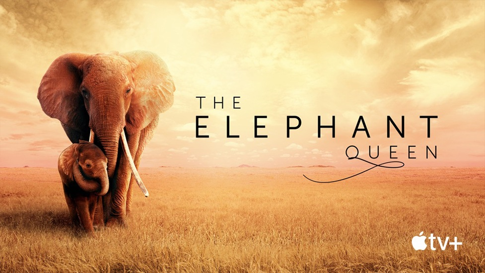 The Elephant Queen